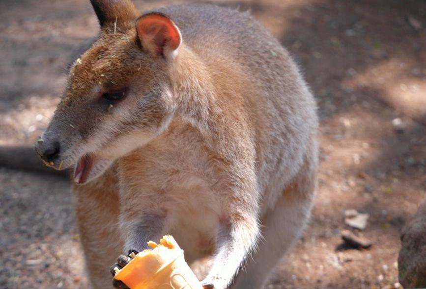 Что посмотреть в Аделаиде? Cleland Wildlife Park