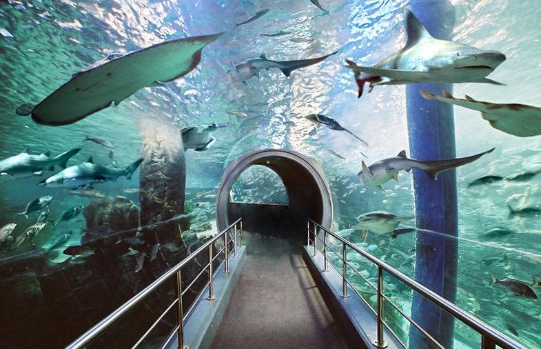 Что посмотреть в Мельбурне? Мельбурнский аквариум