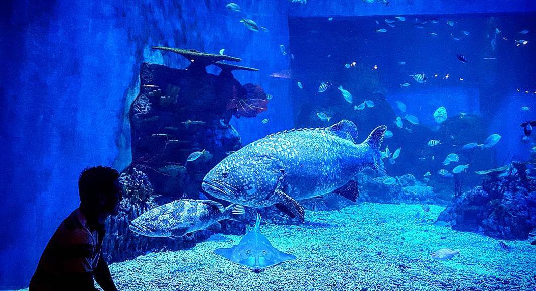 Что посмотреть в Джакарте? Самый большой в Юго-Восточной Азии аквариум
