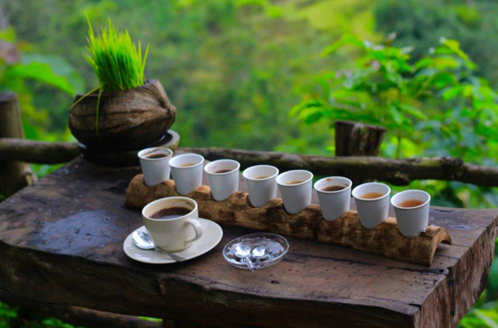 Что посмотреть в Убуде? Самый дорогой на планете кофе