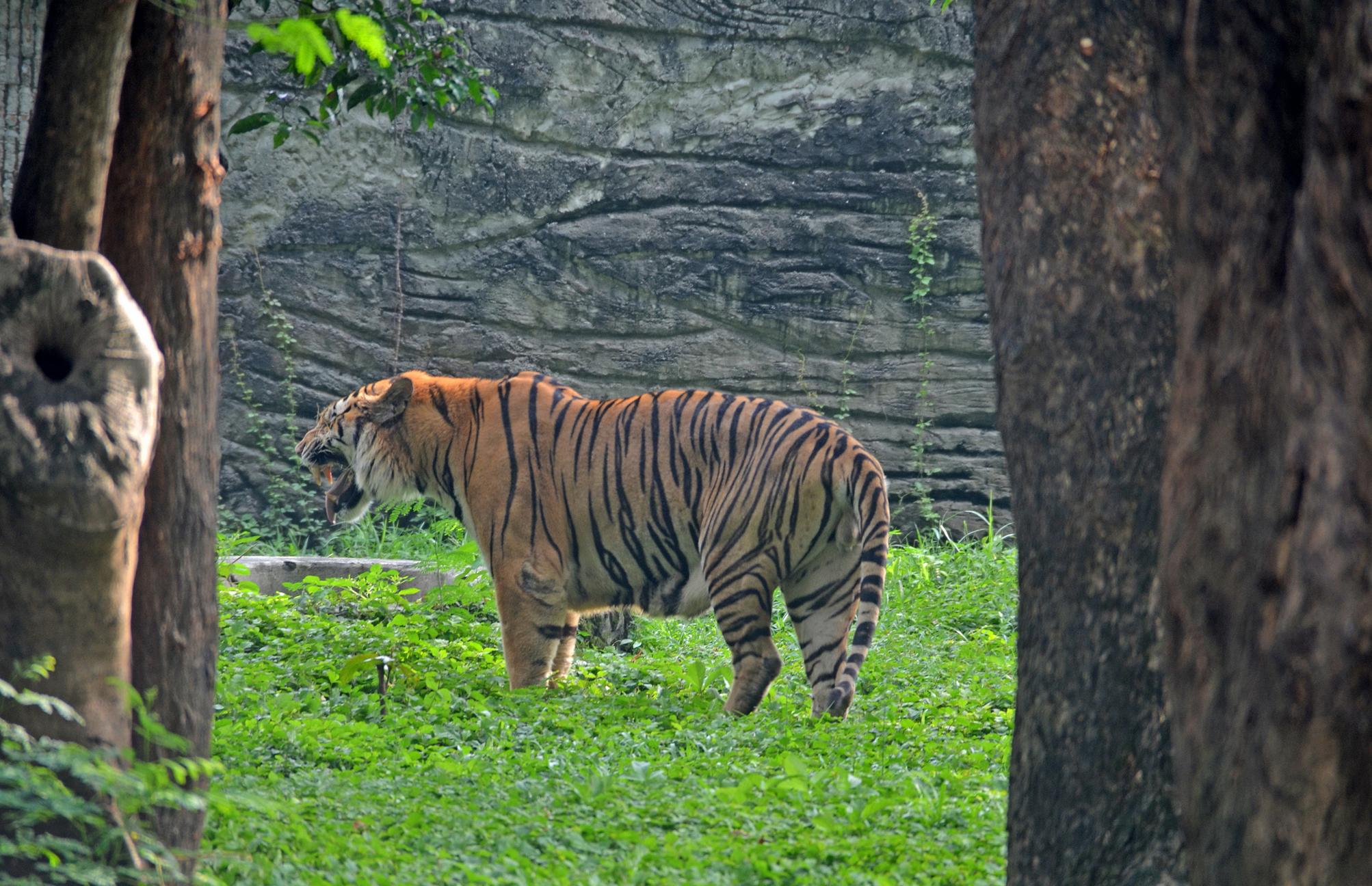 Зоопарк в Сурабае