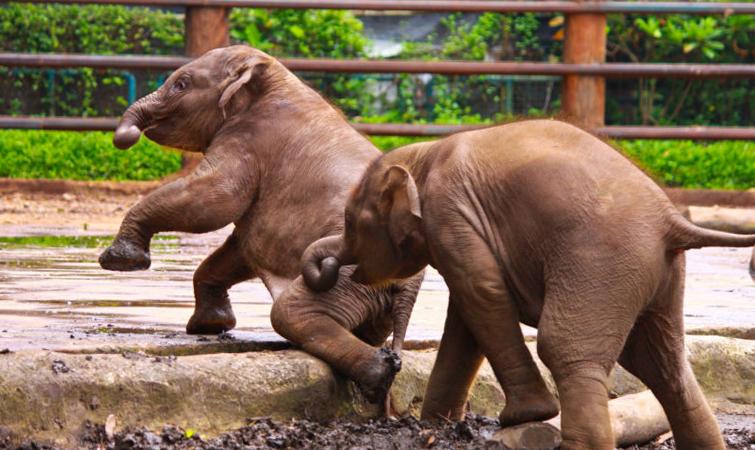 Что посмотреть в Джакарте? Зоопарк «Рангунан»