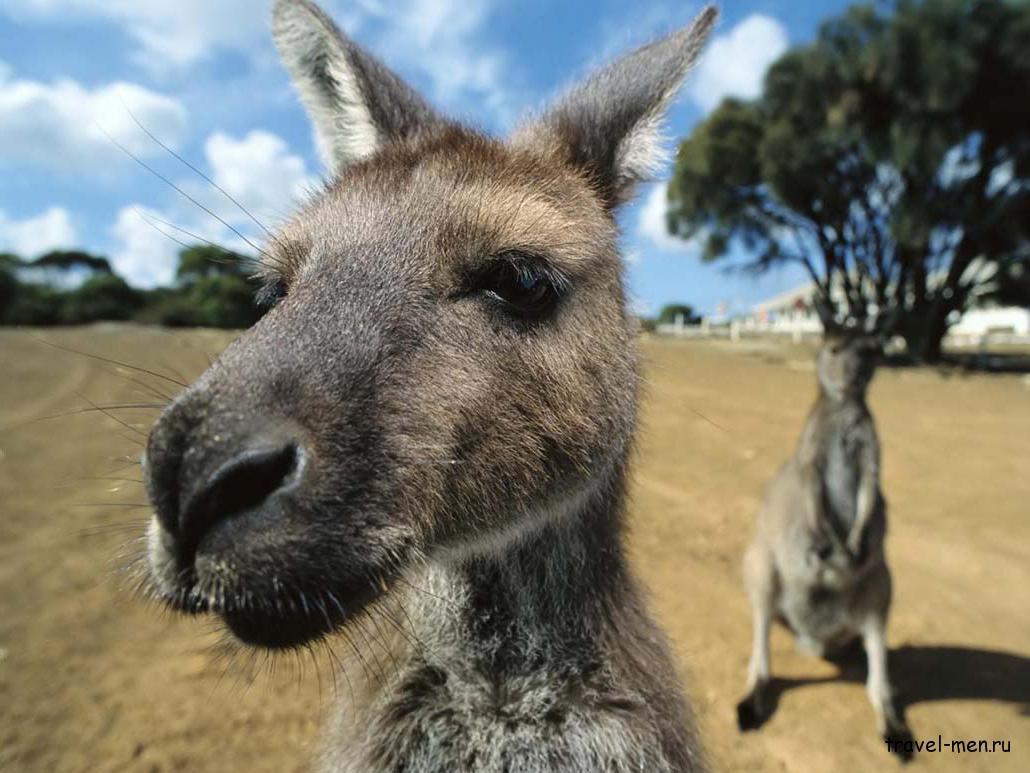 Австралия самое самое