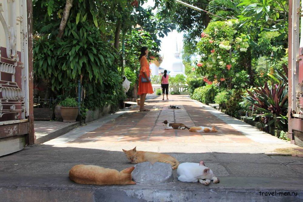 Что посмотреть в Сонгкхла? Кошки на входе в Ват Кланг