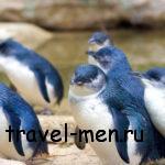 Где можно найти пингвинов в Австралии