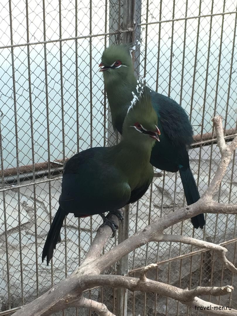 Путешествие в Иран. Интересные птички