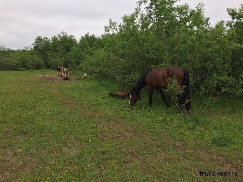 Конные прогулки. Лошадки